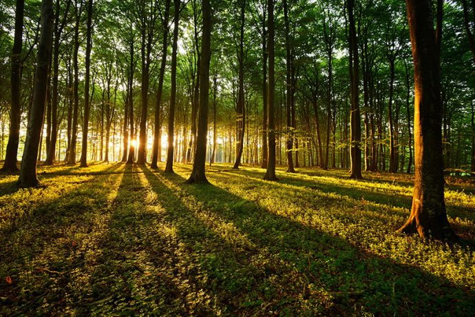 asigurare padure si mase lemnoase